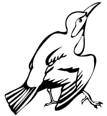 Creeper Bird coloring page