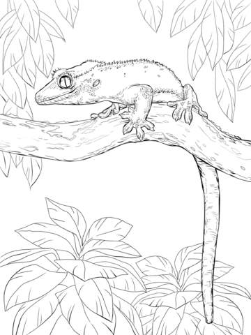 Crested Gecko on A Tree coloring page