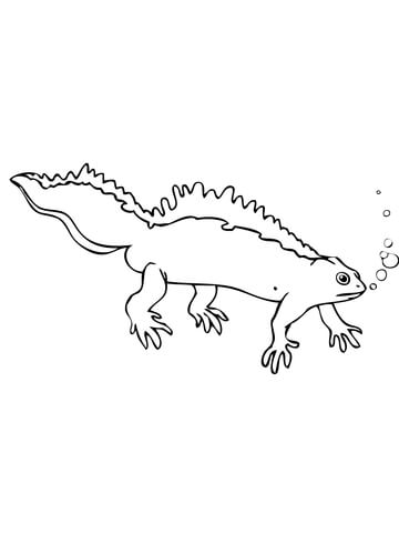 Crested Newt coloring page