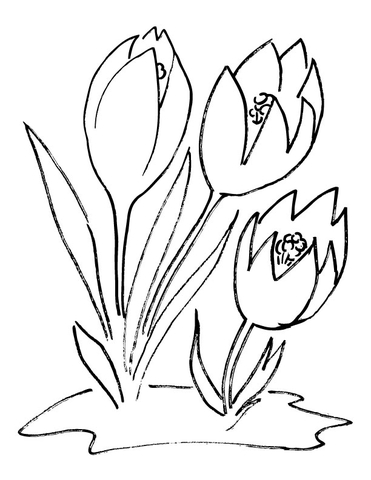 Crocus Flower coloring page