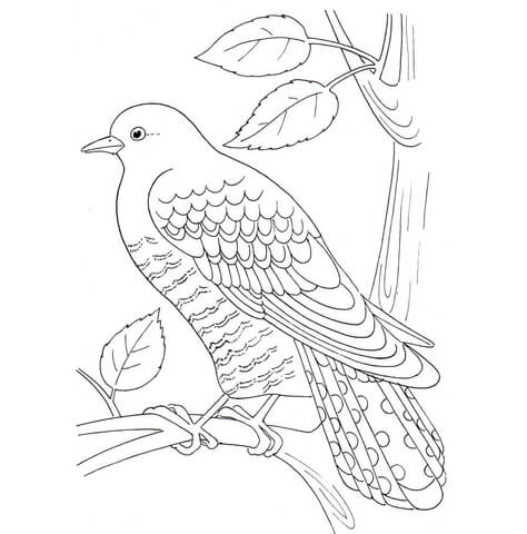 Cuckoo coloring page