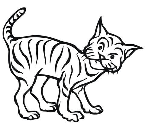 Laying Bobcat Coloring Page