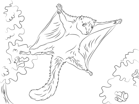 Cute Flying Squirrel coloring page
