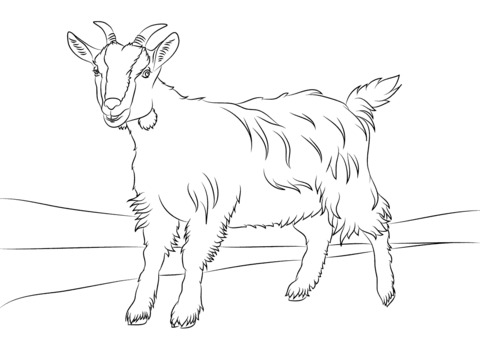 Markhor Coloring Page Cute Goat
