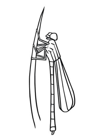 Damselfly coloring page
