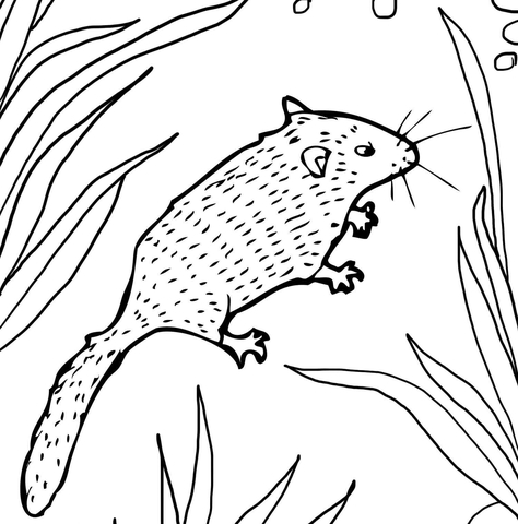 Dormouse coloring page