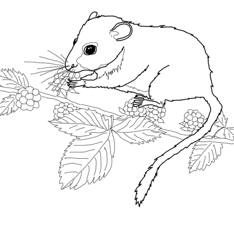 Dormouse Eating Berries coloring page