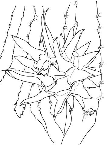 Dragon Fruit on Tree coloring page