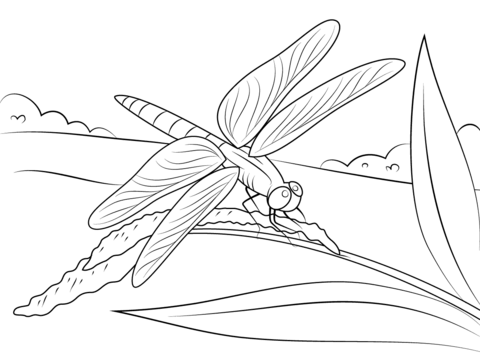 Dragonfly Sits on Stem coloring page