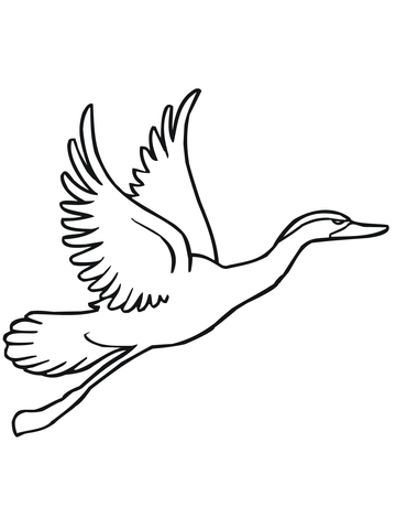 Duck Flying Away Coloring Page