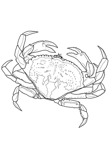Dungeness Crab coloring page