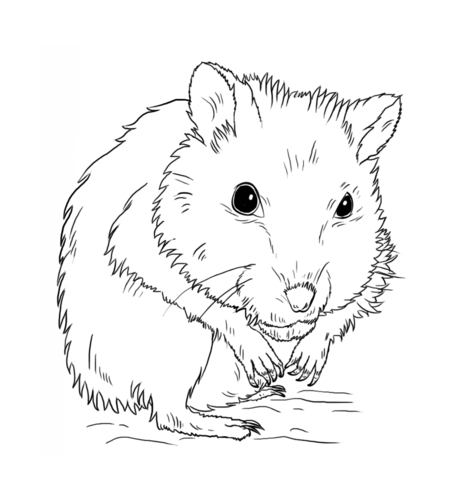 Dwarf Hamster coloring page