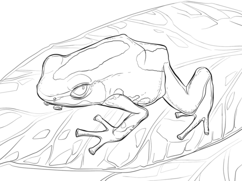 Dyeing Dart Frog coloring page