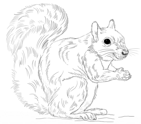 Eastern Gray Squirrel coloring page - Free Printable ...