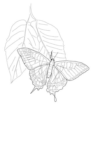 Eastern Tiger Swallowtail coloring page