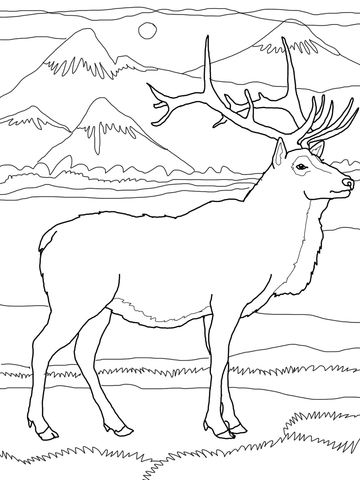 Elk or Wapiti coloring page