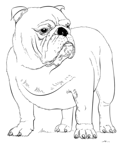 Dog Mother And Puppy coloring page - Free Printable Coloring Pages