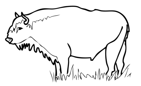 European Bison Wisent coloring page