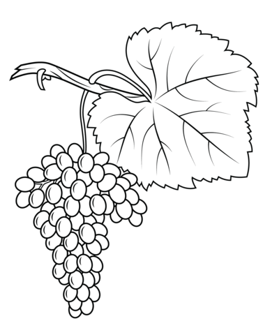 Fiano Grapes coloring page