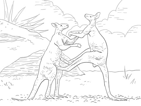 Fighting Red Kangaroos Coloring Page Free Printable Coloring Pages