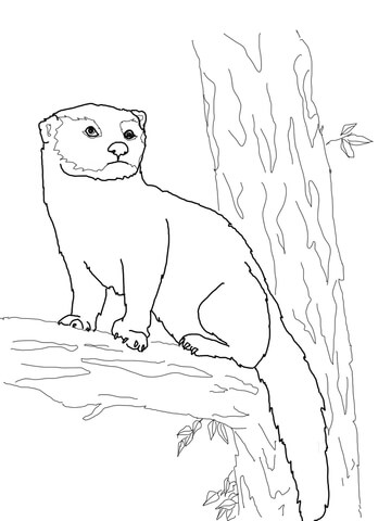 Fisher Cat coloring page
