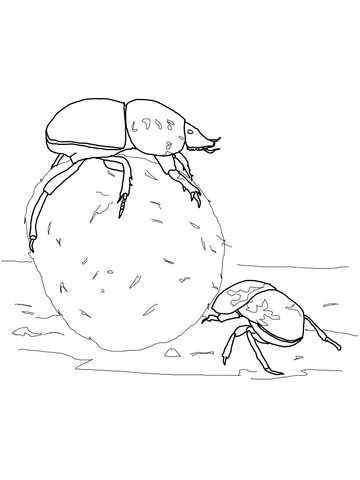 Flightless Dung Beetles coloring page