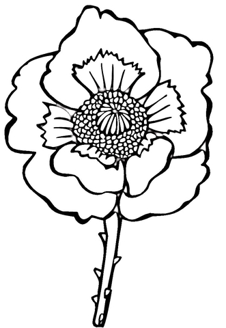 Flower Poppy  coloring page