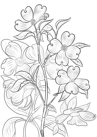 Flowering Dogwood coloring page