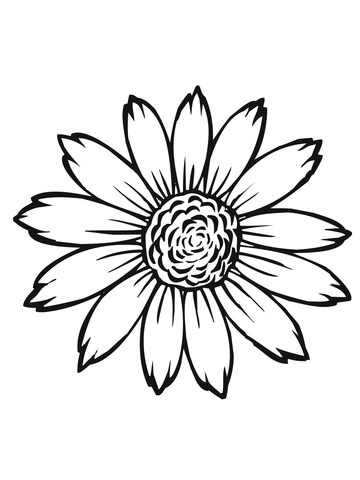 Blooming Sunflower Coloring Page Flowering Head Of