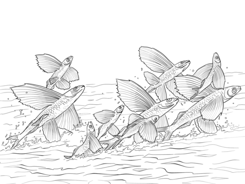 Flying Fishes Shoal coloring page