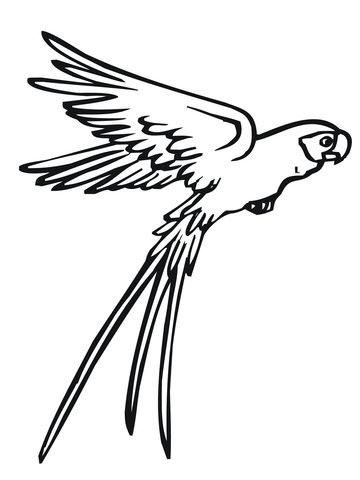 budgerigar parrot coloring page flying parrot coloring page