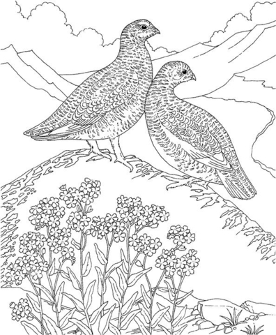 Forget Me Not And Birds coloring page