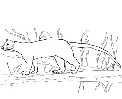 Fossa from Madagascar coloring page