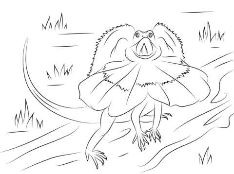 Frilled Dragon Lizard coloring page