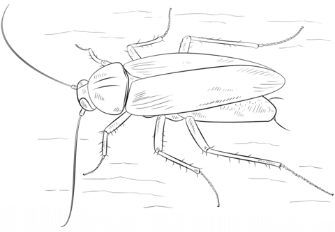 German Cockroach coloring page