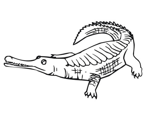 crocodile coloring page gharial coloring page