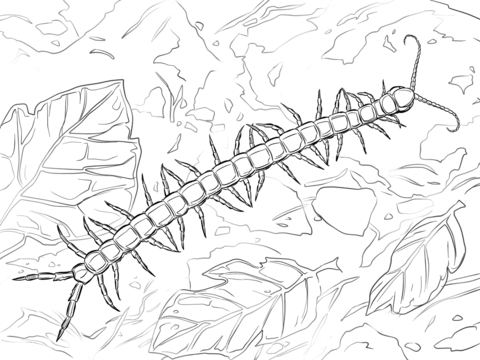 Giant Centipede coloring page