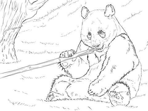 Giant Panda is Eating Bamboo coloring page