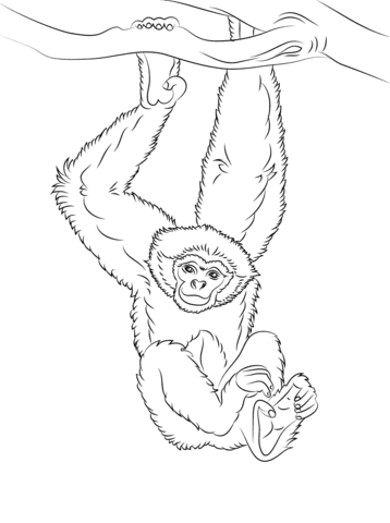 Gibbon Hanging from a Tree coloring page