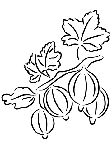 Gooseberries coloring page