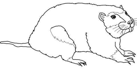 Gopher coloring page