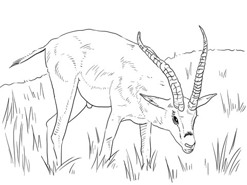 Grant's Gazelle  coloring page