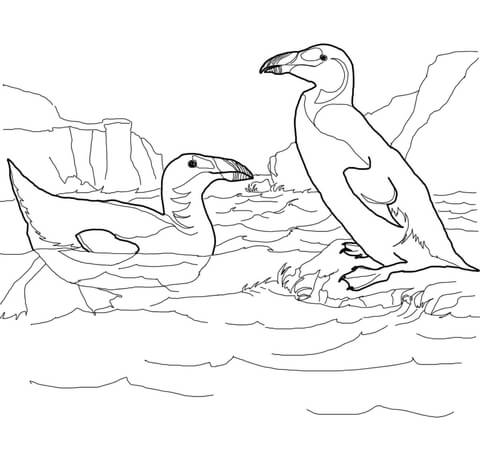 Extinct Great Auk coloring page