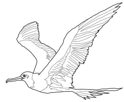 Great Frigatebird coloring page