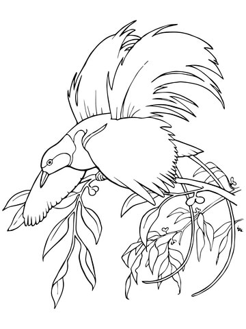 Greater Bird-of-Paradise coloring page