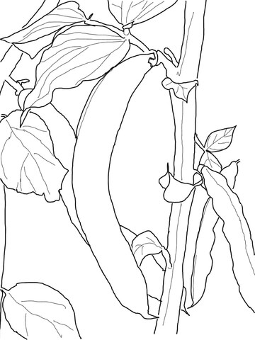 Green Bean coloring page