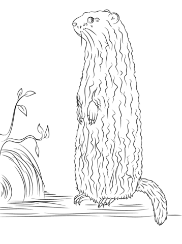Groundhog Standing up coloring page