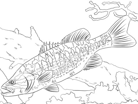 Guadalupe Bass coloring page