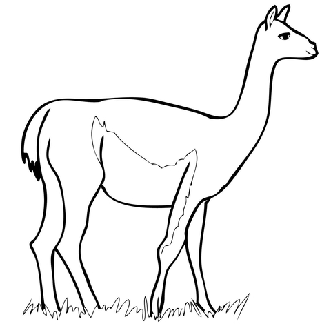 Guanaco from South America coloring page