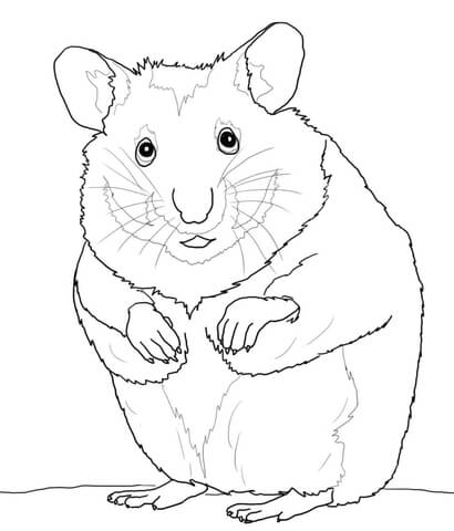 hamster plays its toy coloring page hamster coloring page - Hamster Coloring Pages